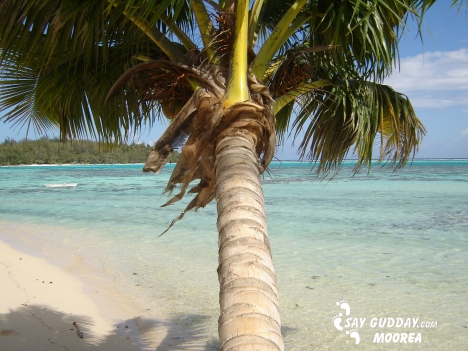 moorea, tropical paradise and white sand beach