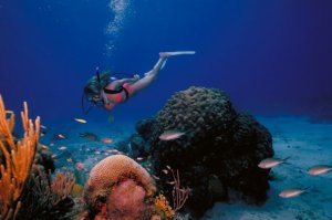 snorkeling in the U.S. Virgin Islands